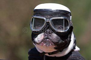 je vends des photographies de chiens en ligne